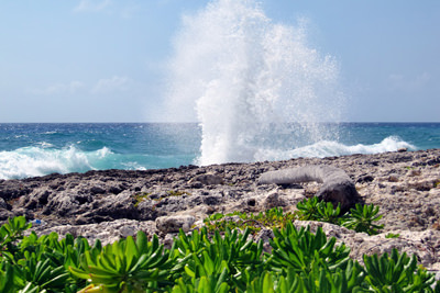 Blow Holes in the Cayman Islands