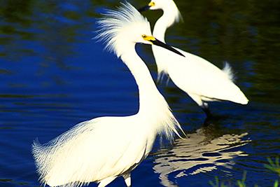 Bird Watching in Little Cayman