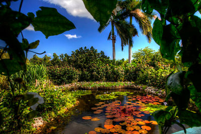 Queen Elizabeth II Botanic Park in the Cayman Islands