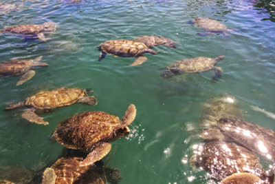 Turtle Farm in the Cayman Islands